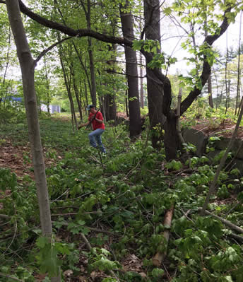 Trail clearing 2016